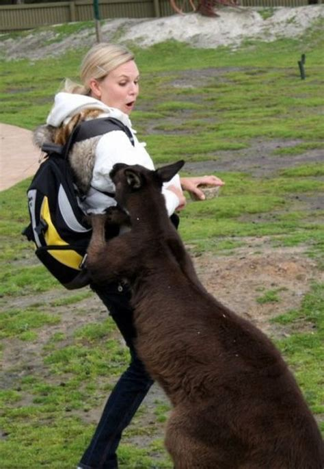 Animals being mean to women (35 Photos) - FunCage